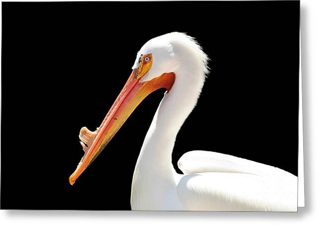 American Pelican Greeting Card by Jeannie Burleson