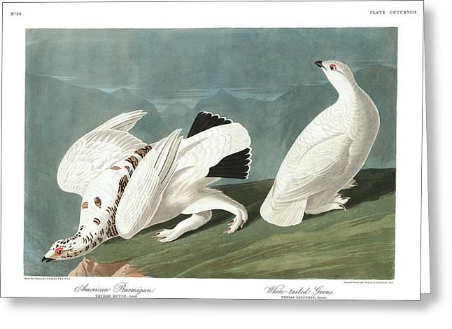 Mountain Greeting Cards - American Ptarmigan Greeting Card by John James Audubon