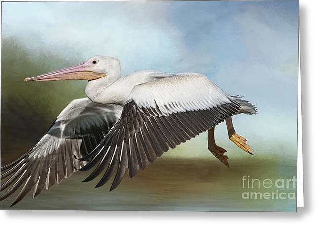 Flying White Pelicans Greeting Cards - American White Pelican in Flight Greeting Card by Bonnie Barry