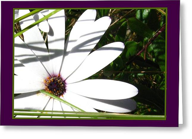 Spring Greeting Cards - Amethyst and White Petals Greeting Card by Gretchen Wrede