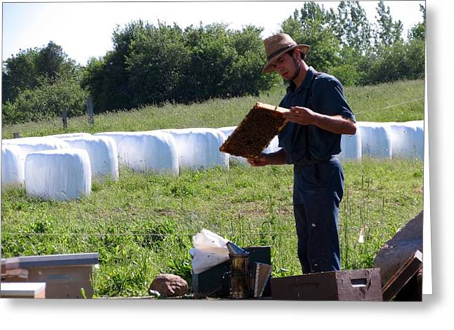 Horse And Cart Greeting Cards - Amish bee keeper Greeting Card by Kenneth Summers