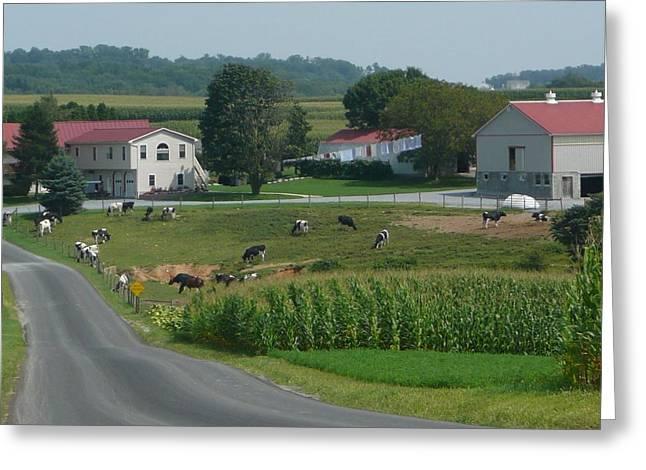 Amish Greeting Cards - Amish Country Road Greeting Card by Lori Seaman