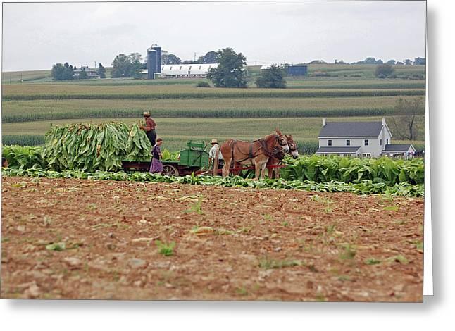 Amish Farm Harvest Greeting Card by Joyce Huhra