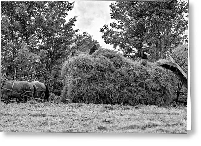 Haying Greeting Cards - Amish Harvest bw Greeting Card by Steve Harrington