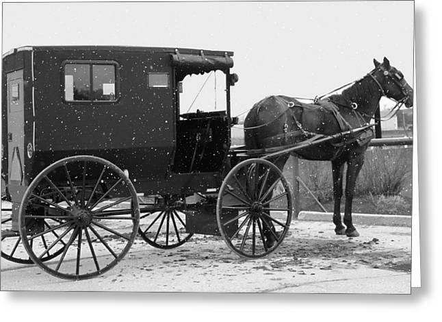 Amish Horse And Buggy In Snow Black And White Greeting Card by Dan Sproul