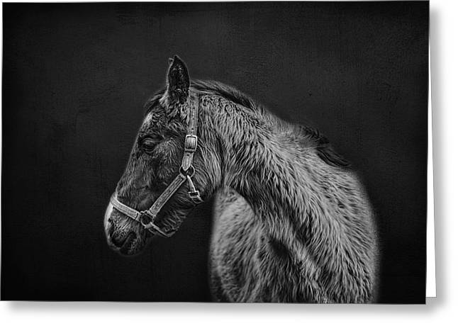 Amish Horse Portrait Greeting Card by SharaLee Art