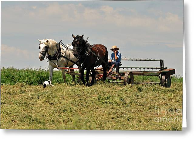 Working Dog Greeting Cards - Amish Life Greeting Card by Davids Digits