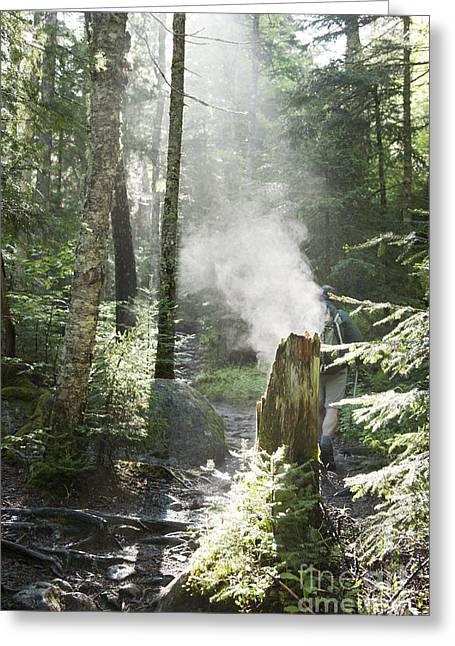 Ammonoosuc Ravine Trail - White Mountains New Hampshire Usa Greeting Card by Erin Paul Donovan