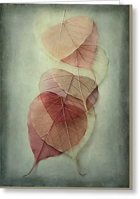 Among Shades Greeting Card by Maggie Terlecki