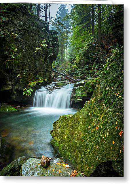 Beautiful Creek Greeting Cards - Among the green rocks Greeting Card by Dmytro Korol