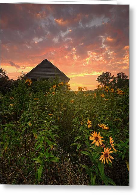 Sunset Prints Greeting Cards - Among The Wildflowers Greeting Card by Aaron J Groen