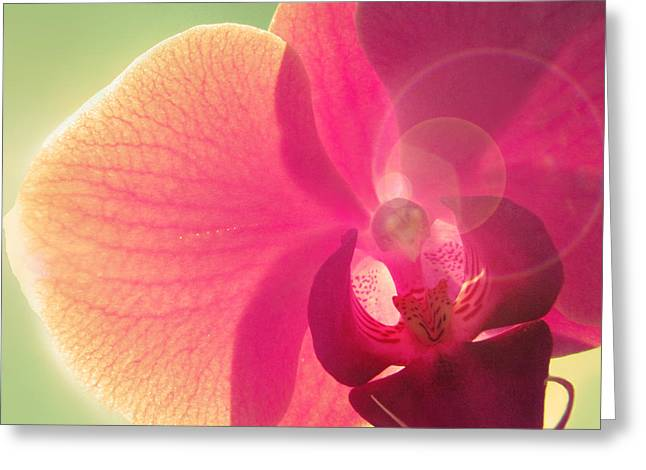 Orchids Greeting Cards - Amoroso Greeting Card by Amy Tyler