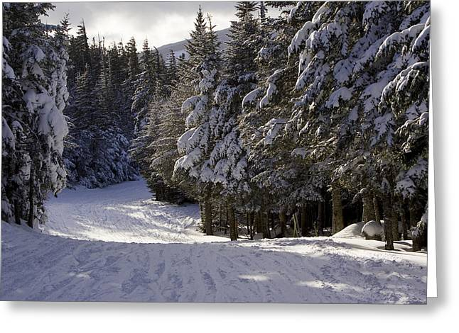 Wildcats Greeting Cards - An Alpine Ski Trail On Wildcat Mountain Greeting Card by Tim Laman