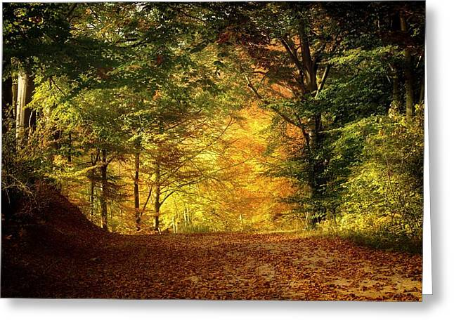 Crisp Greeting Cards - An Amazing Fall Day Greeting Card by Petre Artene