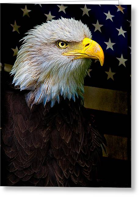 Eagles Greeting Cards - An American Icon Greeting Card by Chris Lord