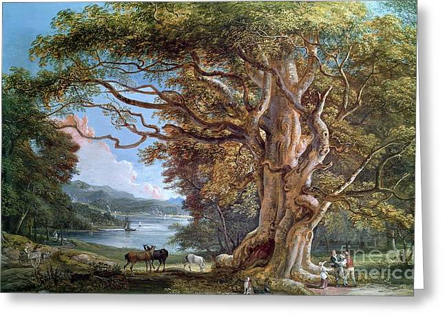Roots Paintings Greeting Cards - An Ancient Beech Tree Greeting Card by Paul Sandby