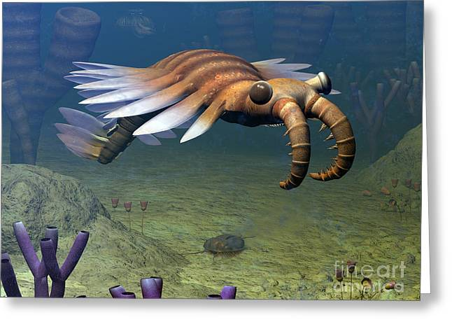 Invertebrates Digital Art Greeting Cards - An Anomalocaris Explores A Middle Greeting Card by Walter Myers