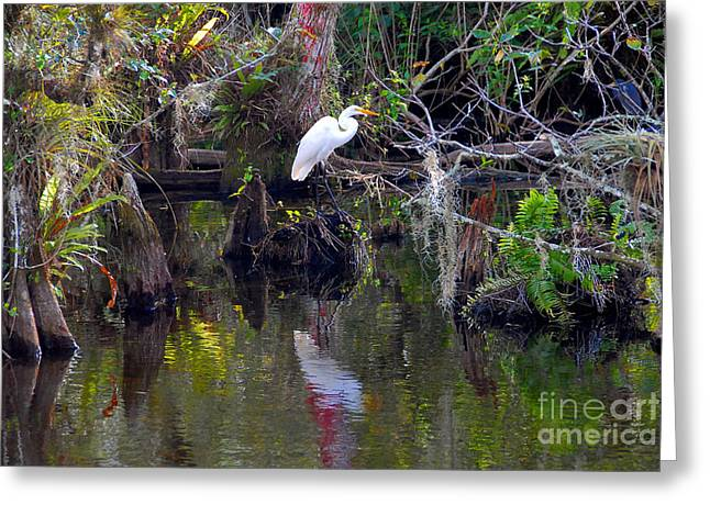 Everglades Greeting Cards - An Egrets World Greeting Card by David Lee Thompson