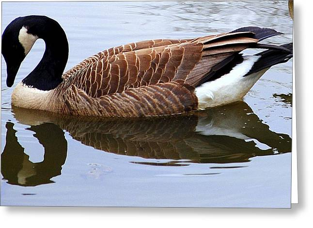 Reflecting Water Greeting Cards - An Elegant Pose Greeting Card by Frozen in Time Fine Art Photography