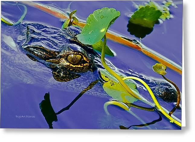 Florida Gators Digital Greeting Cards - An Eye for the Camera Greeting Card by DigiArt Diaries by Vicky B Fuller