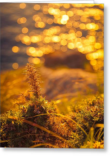 Ocean Shore Greeting Cards - An Ocean View at Sunset Greeting Card by Loriental Photography