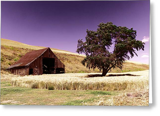 An Old Barn And A Tree Greeting Card by Jeff Swan