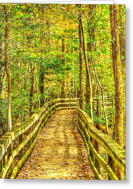 An Old Growth Bottomland Hardwood Forest Greeting Card by Don Mercer