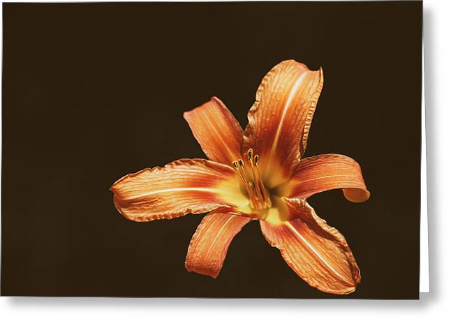 An Orange Lily Greeting Card by Scott Norris