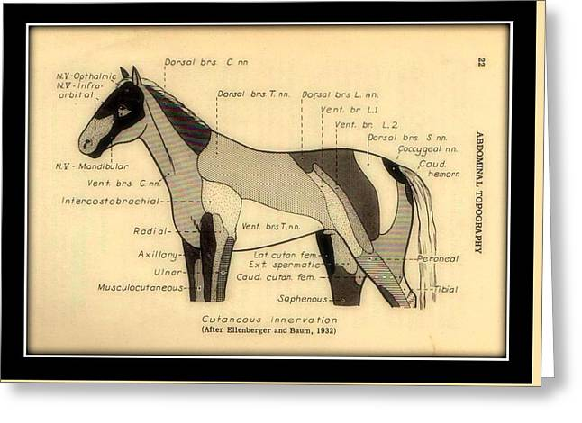 Physiology Drawings Greeting Cards - Vintage Anatomy of the Horse Chart Greeting Card by Peter Gumaer Ogden Gallery