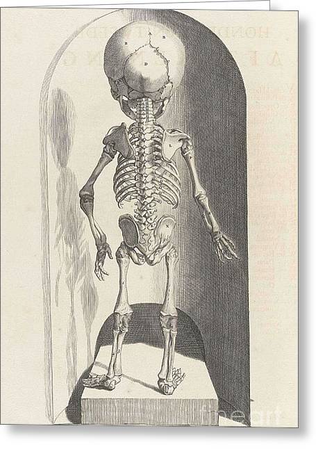 Naturalistic Greeting Cards - Anatomia Humani Corporis, Table 102 Greeting Card by Science Source