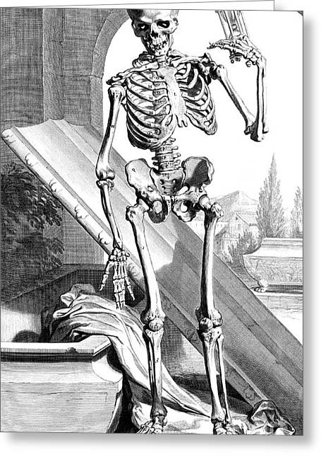 Naturalistic Greeting Cards - Anatomia Humani Corporis, Table 87, 1690 Greeting Card by Science Source