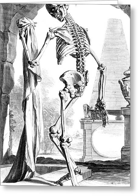 Naturalistic Greeting Cards - Anatomia Humani Corporis, Table 88, 1690 Greeting Card by Science Source