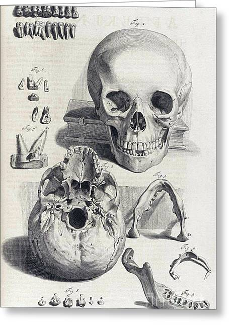 Naturalistic Greeting Cards - Anatomia Humani Corporis, Table 92, 1690 Greeting Card by Science Source