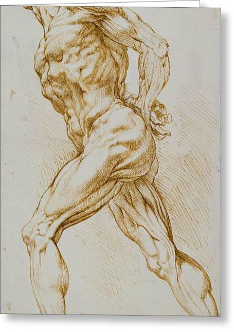 Erotic Male Drawings Greeting Cards - Anatomical study Greeting Card by Rubens