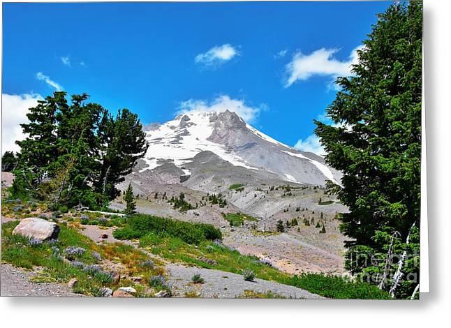 Whitebark Pines Greeting Cards - Mt Hood Oregon - Summertime Greeting Card by Scott Cameron
