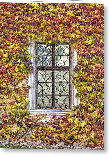 Facades Pyrography Greeting Cards - Ancient window with ivy Greeting Card by Riccardo Zimmitti