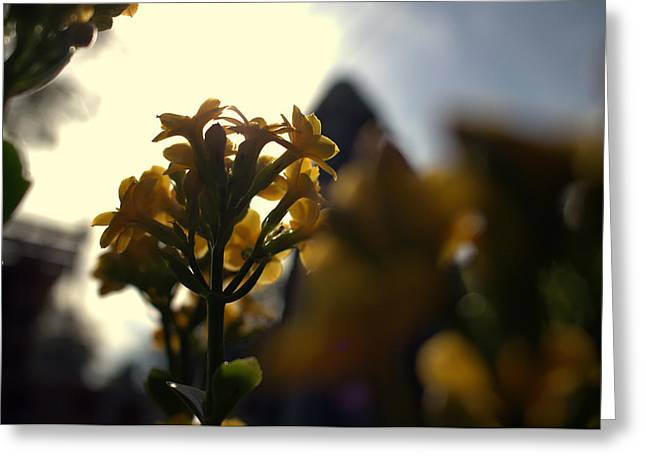 Flowers Against The Sky Greeting Cards - And it was called yellow. Greeting Card by Guilherme Santos