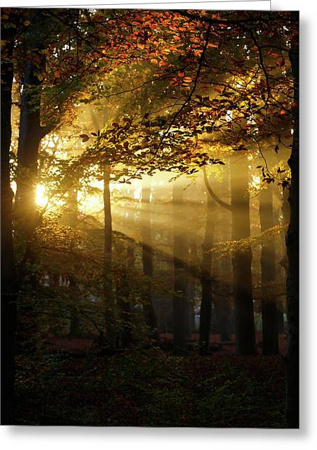 And Then There Was Light - Autumn Forest Greeting Card by Roeselien Raimond