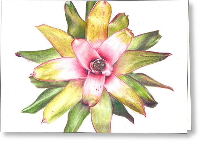 Bromeliad Neoregelia Greeting Cards - Andreas Choice Greeting Card by Penrith Goff