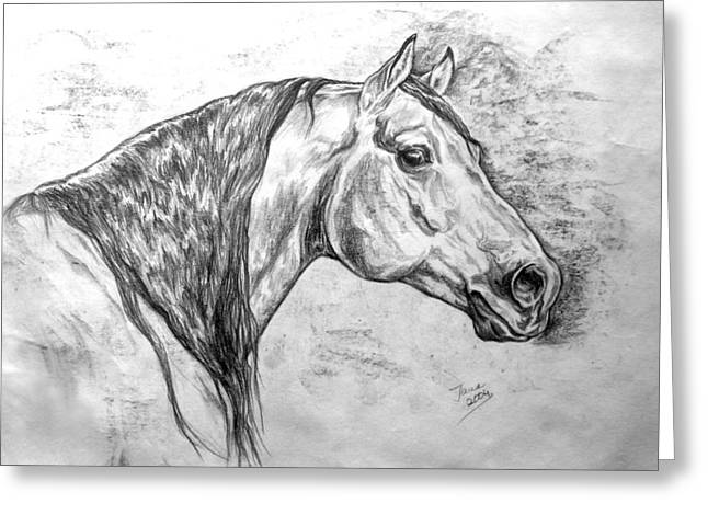 Quarter Horse Greeting Cards - Andy Greeting Card by Jana Goode