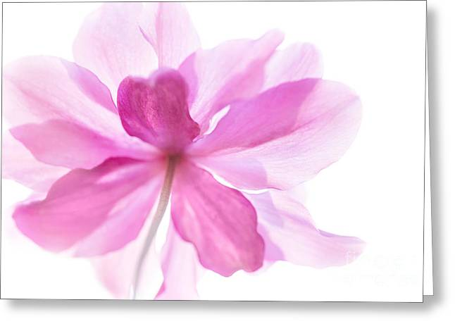 Anemone Flower - Soft And Gentle - Natalie Kinnear Photography Greeting Card by Natalie Kinnear