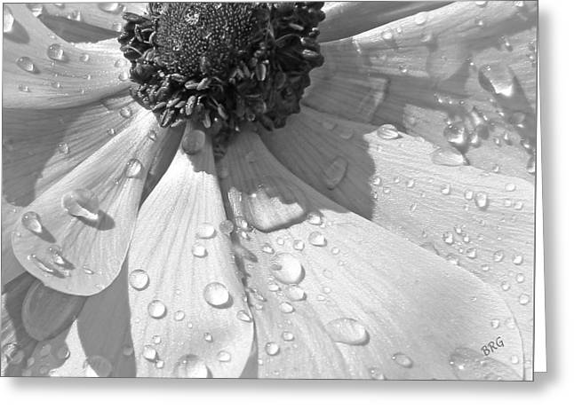 Dewdrops Greeting Cards - Anemone Poppy In Black And White Greeting Card by Ben and Raisa Gertsberg