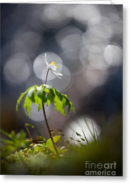 Anemone  Greeting Card by Rikard Strand