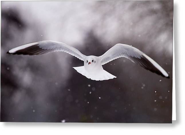 Angel - Gull In The Sky Greeting Card by Roeselien Raimond