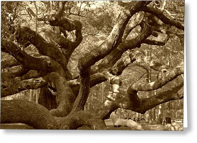 Angel Oak in Sepia Greeting Card by Suzanne Gaff