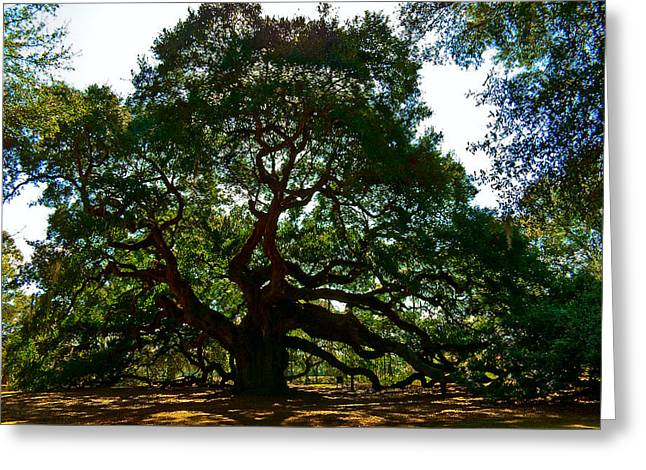 Ovates Greeting Cards - Angel Oak Tree 2004 Greeting Card by Louis Dallara