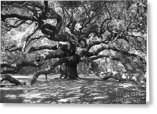 Moss Greeting Cards - Angel Oak Tree Black and White Greeting Card by Melanie Snipes
