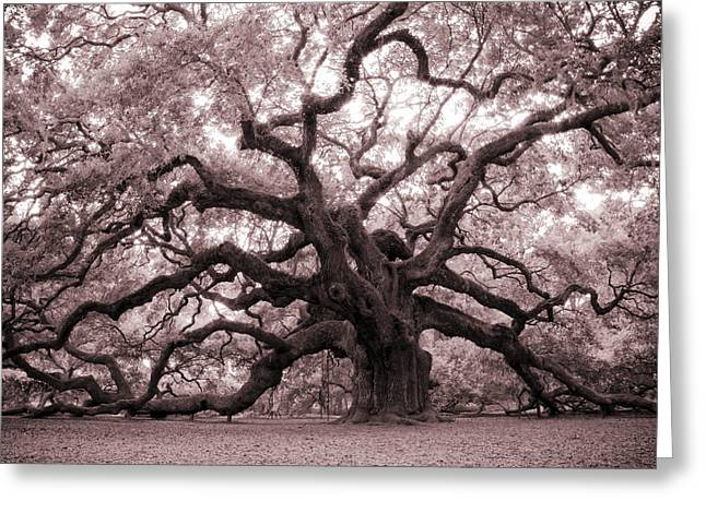 South Carolina Greeting Cards - Angel Oak Tree Greeting Card by Dustin K Ryan
