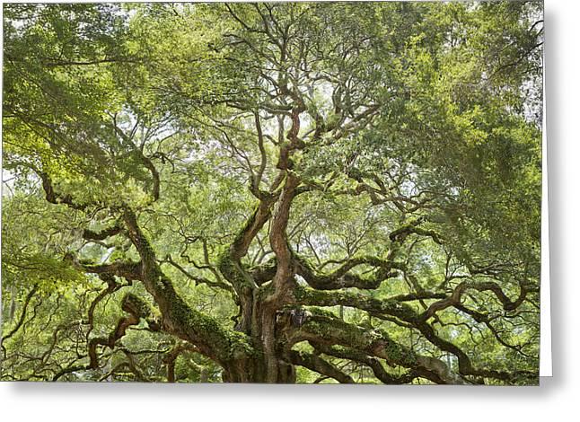 Giant Trees Greeting Cards - Angel Oak Tree Johns Island 64MP Greeting Card by Dustin K Ryan