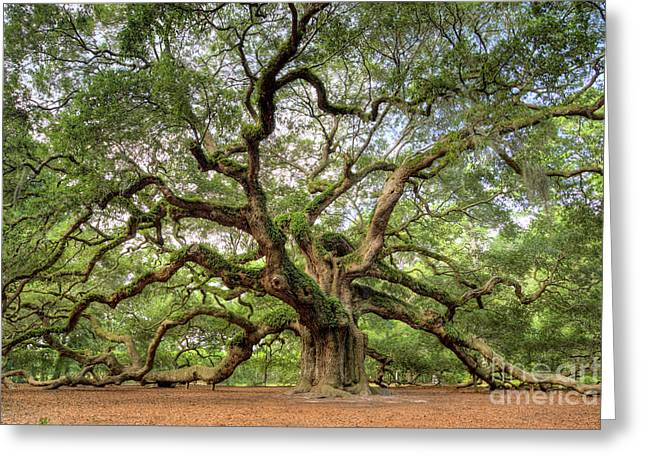Big Trees Greeting Cards - Angel Oak Tree of Life Greeting Card by Dustin K Ryan